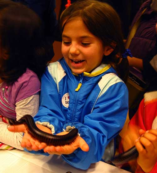 A Kindergartener meets a giant millipede at the Insect Discovery Lab.