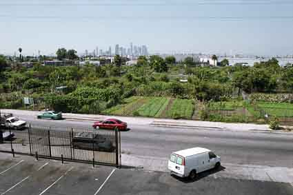 The 14-acre South Central Los Angeles community garden was the largest in the nation until the city council sold the land back to a private developer.
