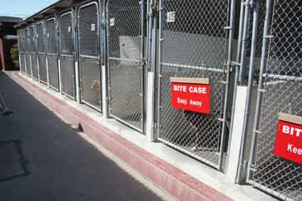 The kennels at the current Berkeley Animal Shelter.