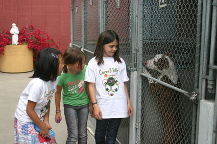Mia Lancaster, 8; Elanie Cassero, 9; and Mirei Machiyma, 9, shake hands with Autumn, an 8-month-old red and white pitbull mix who was found in the basement of an abandoned house during a police raid in Albany three weeks ago. Her owner, the person who was squatting on the property, has not claimed her yet.