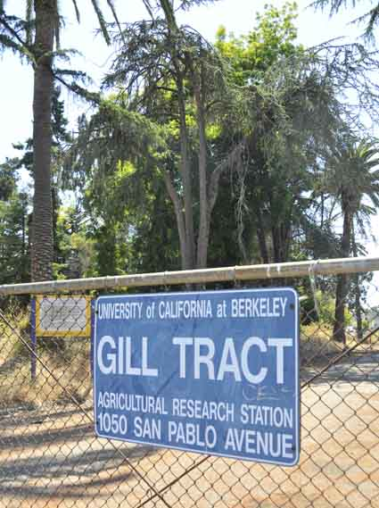 The Gill Tract, once known for agricultural research, will soon have 300 apartments and retail stores, including a Whole Foods.