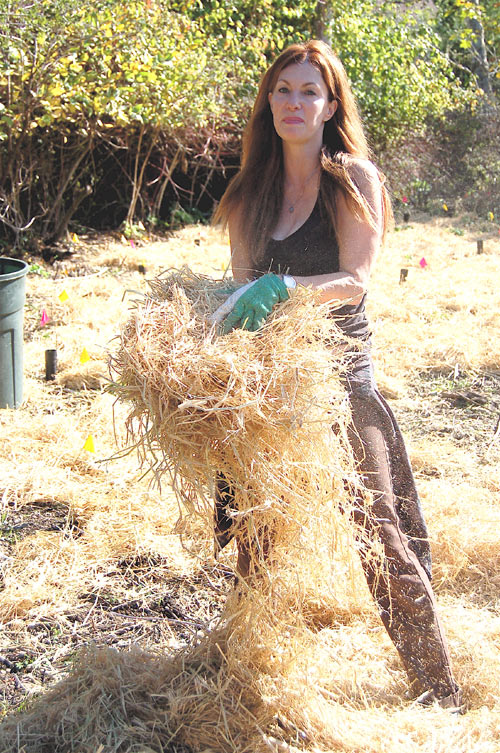 "Eileen, a former Berkeley citizen who ""moved to Marin for love—nothing else could have dragged me out of my town,"" spreads mulch around the mugwort and cow parsnip she's just planted at Volunteer Canyon, Audubon Canyon Ranch."