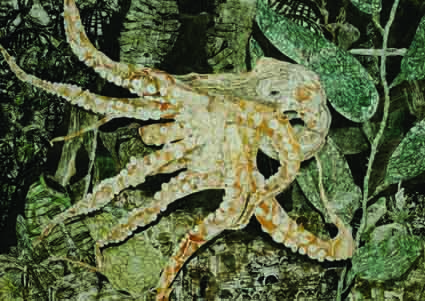 Harry Clewans' <i>Octopus</i>.