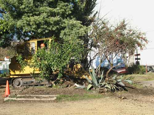 A bulldozer removes trees and shrubs in Berkeley's People's Park.